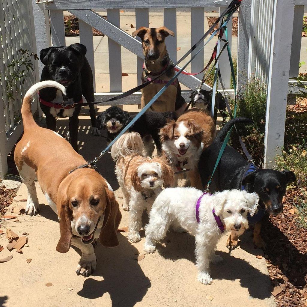 Victoria's Pet Care