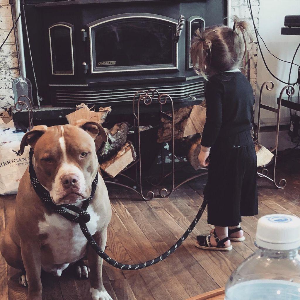 Worlds greatest dog trainer