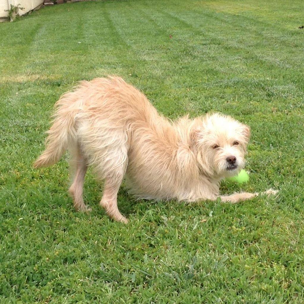 Got Dogs Get Training