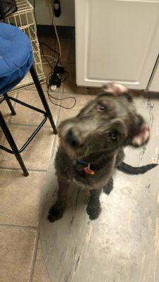 Avatar for Shelly's Pet Parlor Omaha, NE Thumbtack