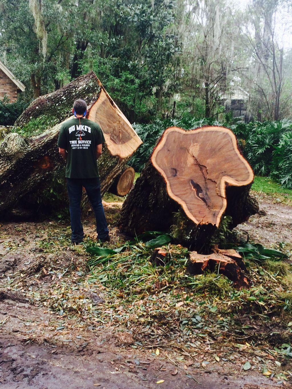 Big Mike's Tree Service