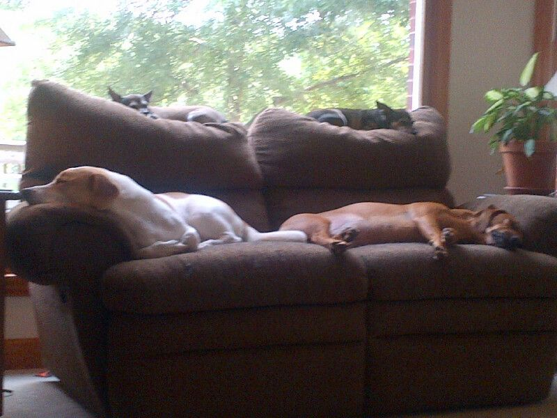 Coweta Fayette Pet Sitting Service, LLC