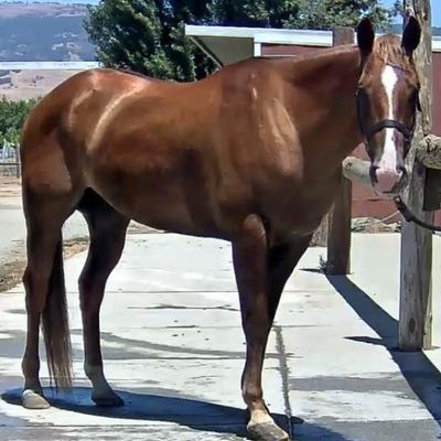 Bright Ranch Horsemanship Academy San Martin, CA Thumbtack