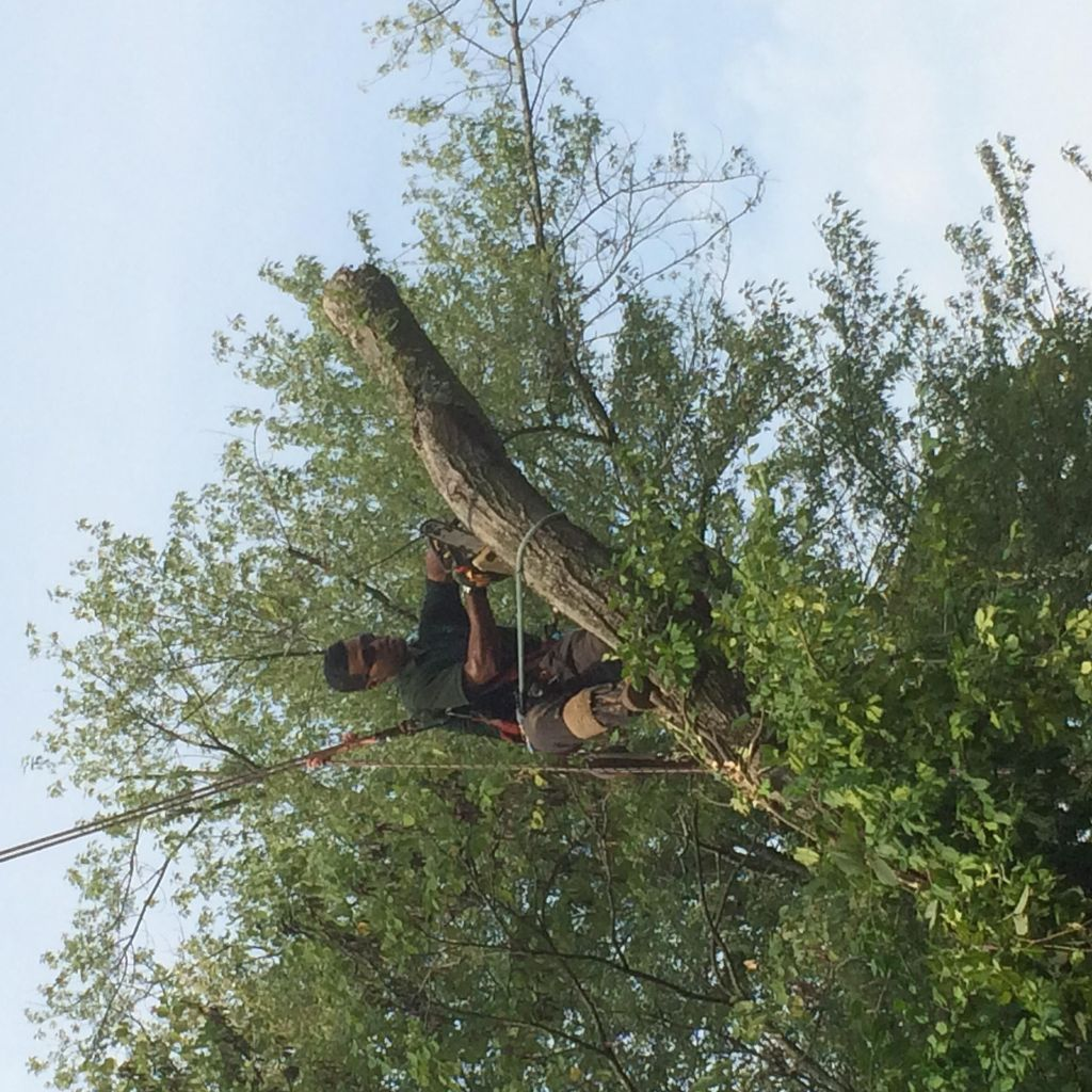 Diego's Professional Tree Service
