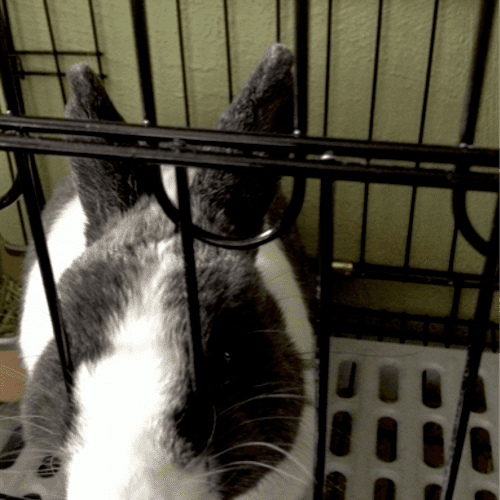 I do Rabbits !