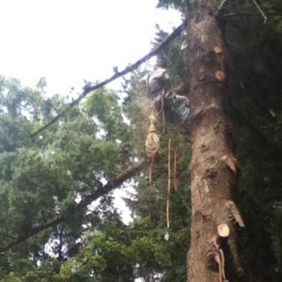 Avatar for Lumberjack Tree Service
