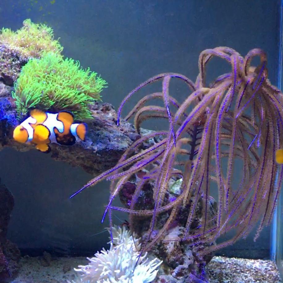 Shark boy Reef Aquariums