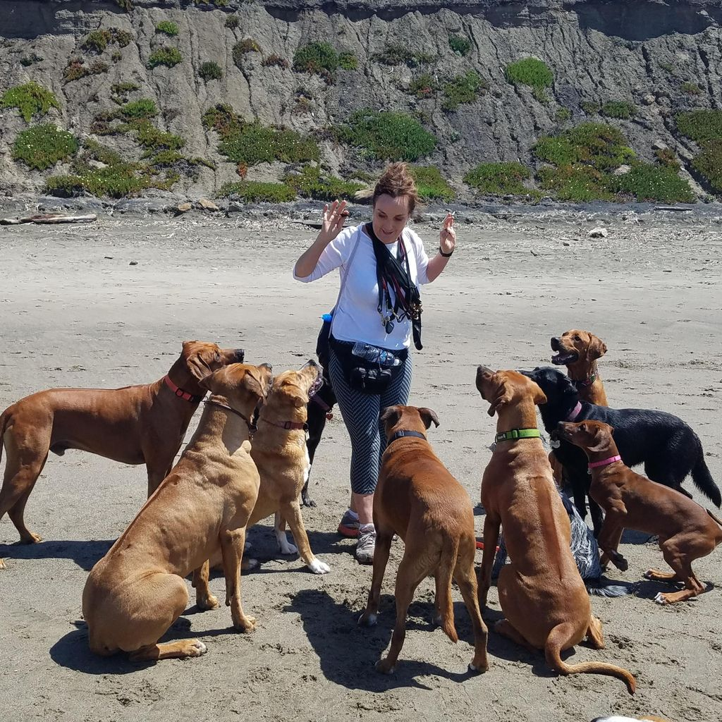 Dog Play SF