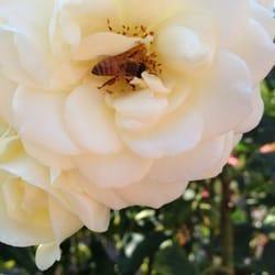 Ecosystem Pest Solutions, LLC  AG-L1021906 License