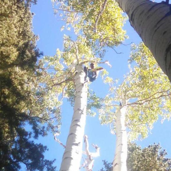 Dutchman Tree Care