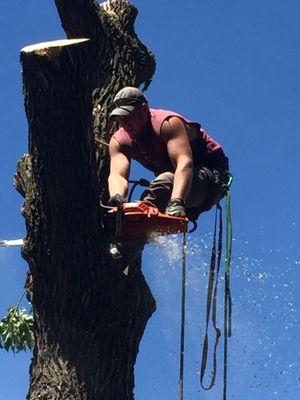 Avatar for Spartan Tree Care Sauk Centre, MN Thumbtack