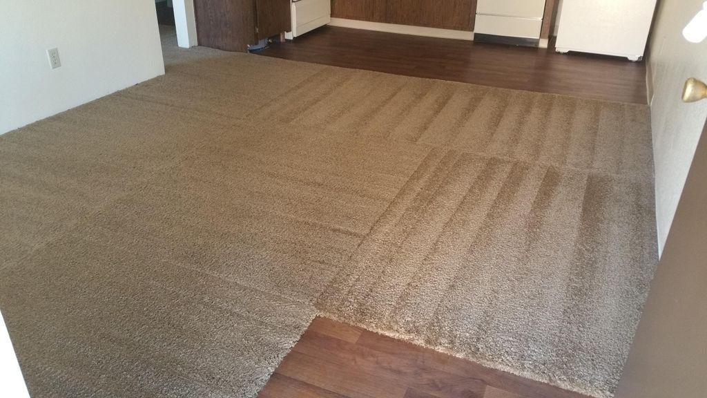 Pro Essentials Carpet Care