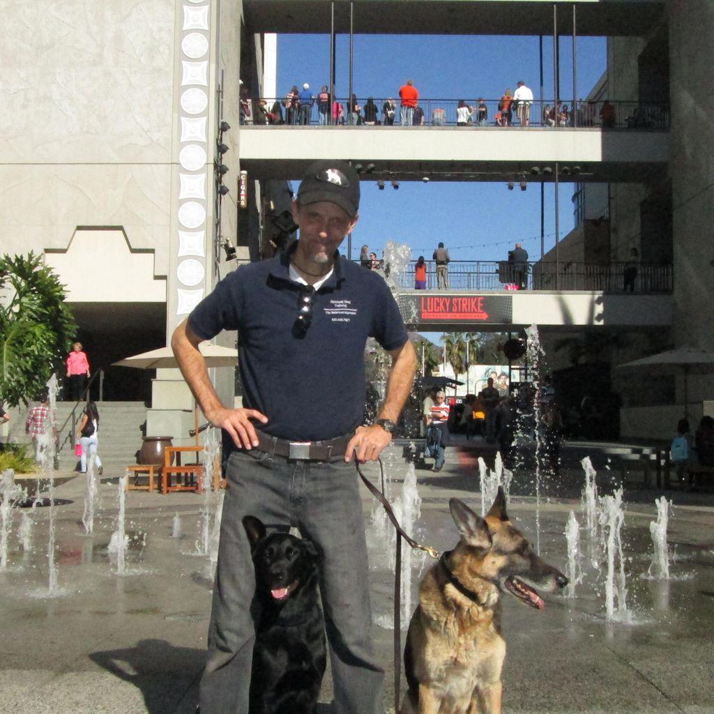 Rip's Dog Training