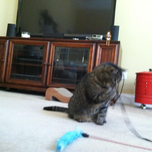 So much fun playing with Lucky!  He loves that shoestring toy!
