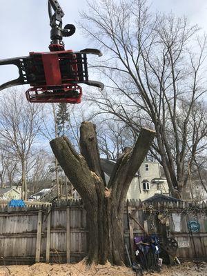 Avatar for Treewerx Madison, WI Thumbtack