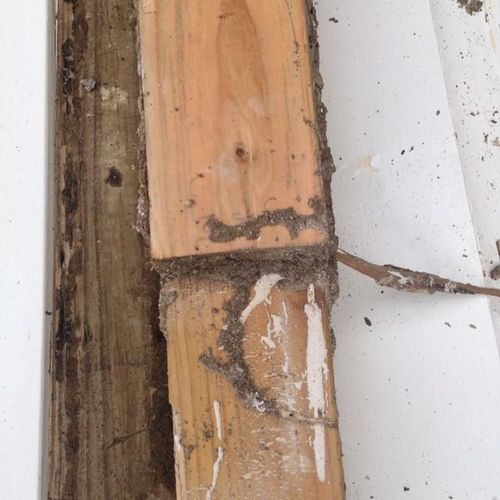 Termite tunnels