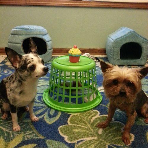 Little dog play area