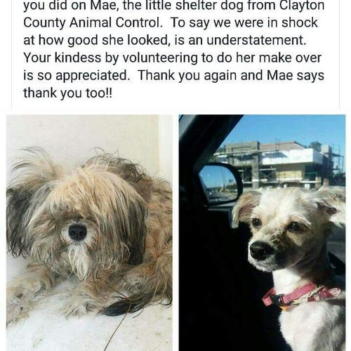 In addition to grooming for hire, I volunteer my grooming services to Clayton County Animal Control and the Clayton County Humane Society.  I love you Mae ❤❤❤