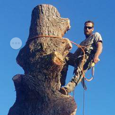 Avatar for All American tree and stump removal Virginia Beach, VA Thumbtack