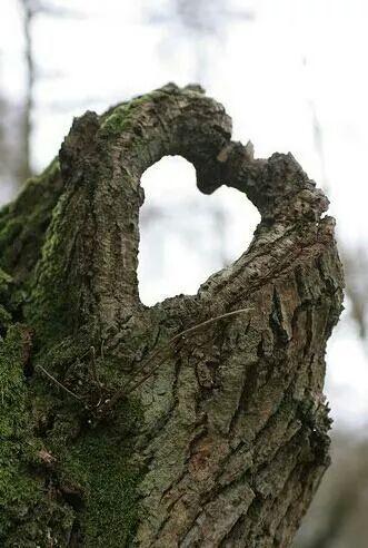 "Nash tree service "" the tree wisemen"""