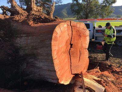 Avatar for Laan's Tree Care Ramona, CA Thumbtack