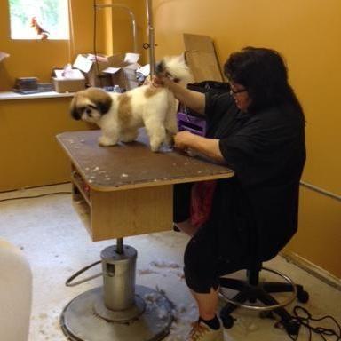 Avatar for Family Companion Pet Salon