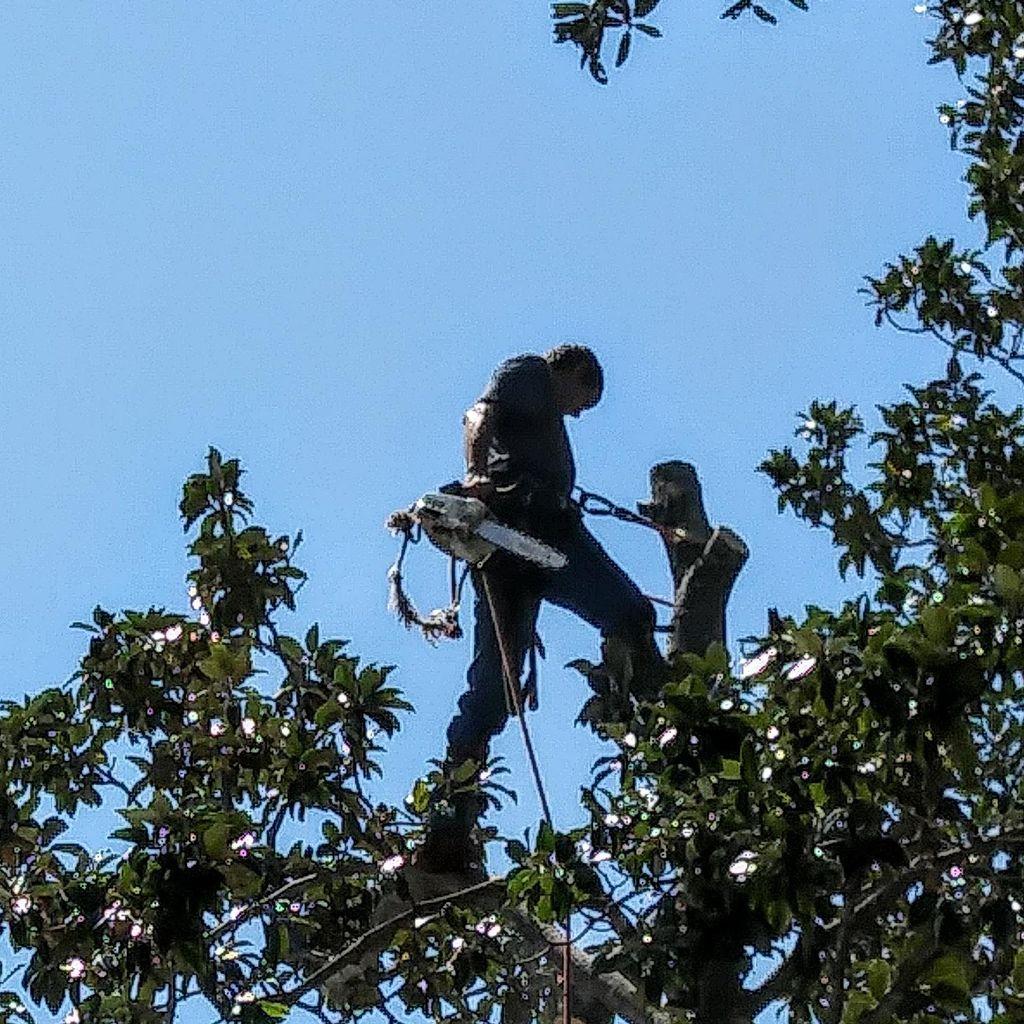 Higher Reach Tree Service