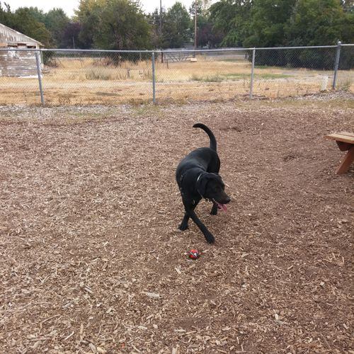 A little time at the dog park