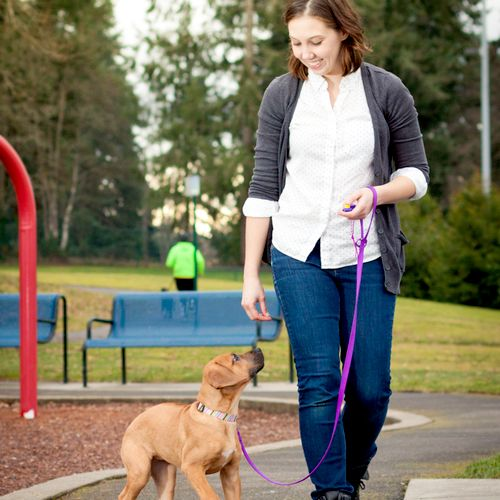 Loose-leash walking and distraction training with Molly. Such a smart cookie!