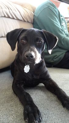 Avatar for Carisa's Loving Pet Care