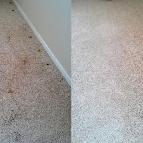 Pet Problems?  Not a problem for Spifco.  We use our plant-based and oxygenated 100% natural pre-treatment and our Health First De-ionized Steam (chemical free) Cleaning to clean, sanitize, and restore your carpets.