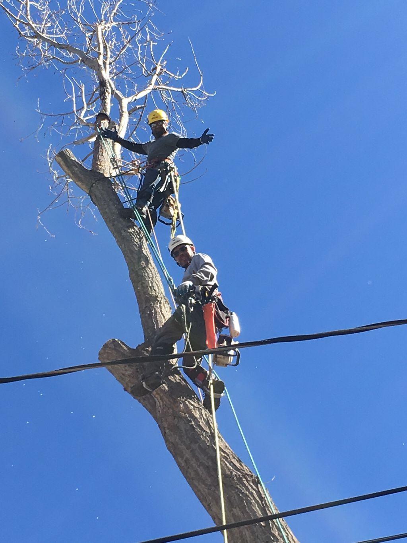 Prodigy Tree Care L.L.C.