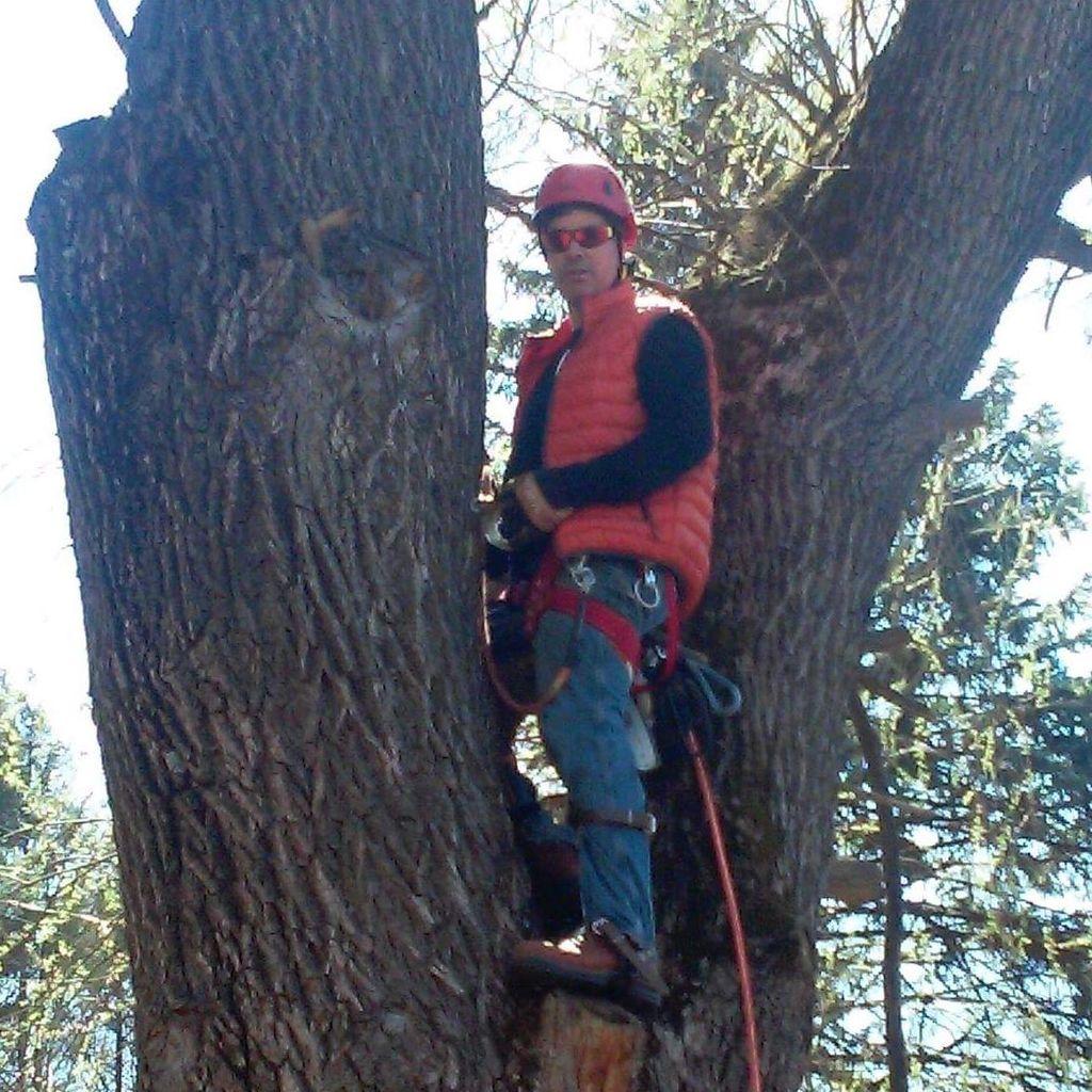 Tree Fellers, Inc.