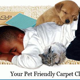 Avatar for Carpet Makeovers