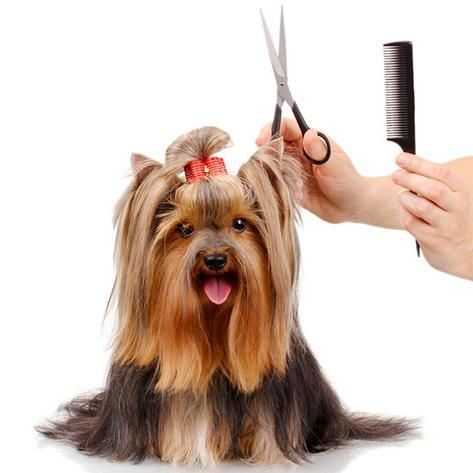 Pawpawrazzi Pets dba The Happy Dog Mobile Grooming