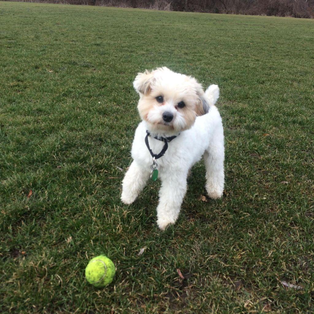 No Dog Too Small Dog Walking and Pet Sitting, LLC
