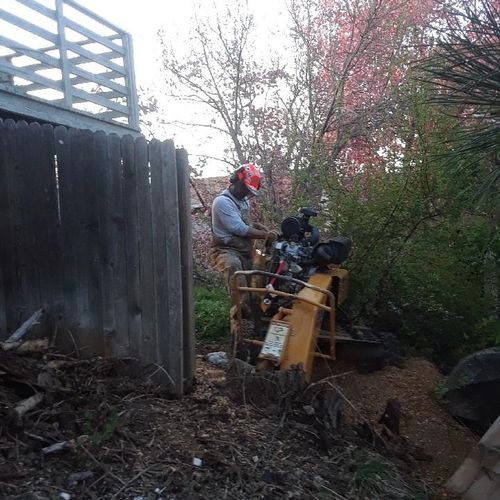 Sometimes we remove fence sections to get at a stump.
