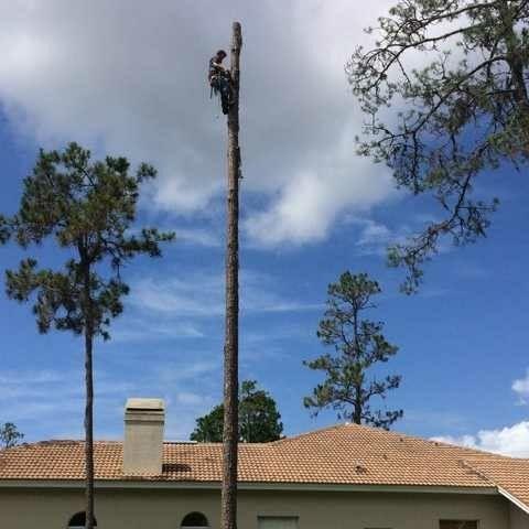 Cutting Edge Tree Service & Property Maintenance