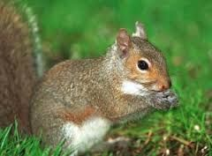 Expert squirrel trapping and removal + Home sealing experts
