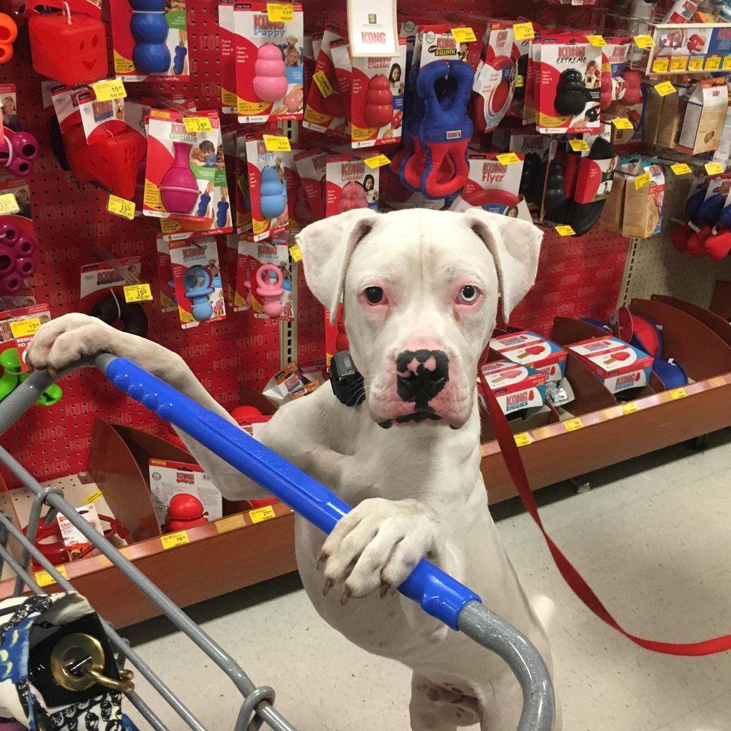 Mo'bedience - Dog Training by Maureen