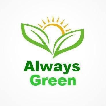 Always Green Carpet Cleaner NYC