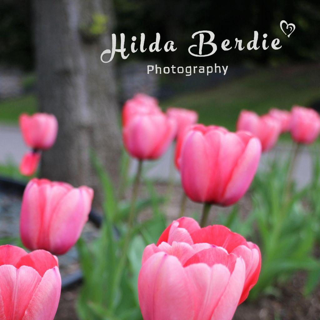 Hilda Berdie Photography