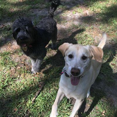 Avatar for Vivien's Pet Services, LLC Mandeville, LA Thumbtack