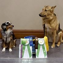 Violet and Raven showing off their earnings from AKC Rally, Barn Hunt, and Conformation at the