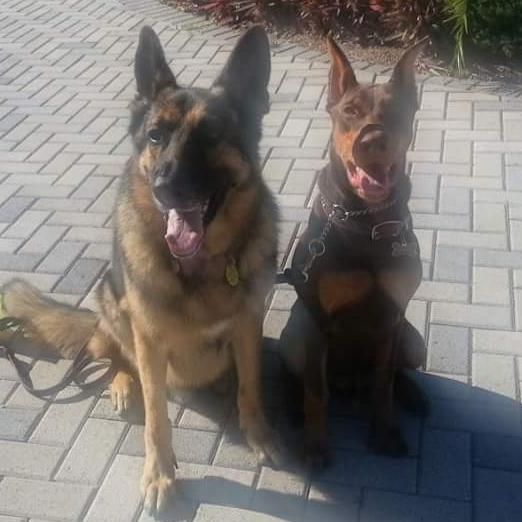 A Best Friend Certified Professional Dog Training