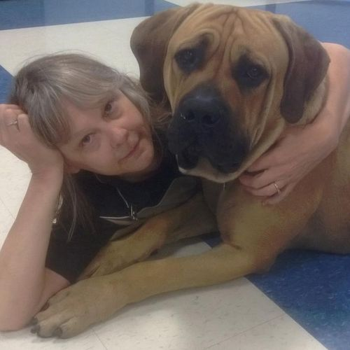 Integration in new family - Between homes - big boy is now happy with a lovely sister and family. Sometimes a first rescue placement does not work and a change in family offers the perfect solution.
