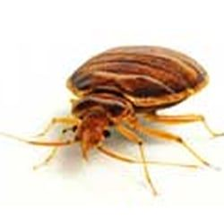 We specialize in bedbugs too!