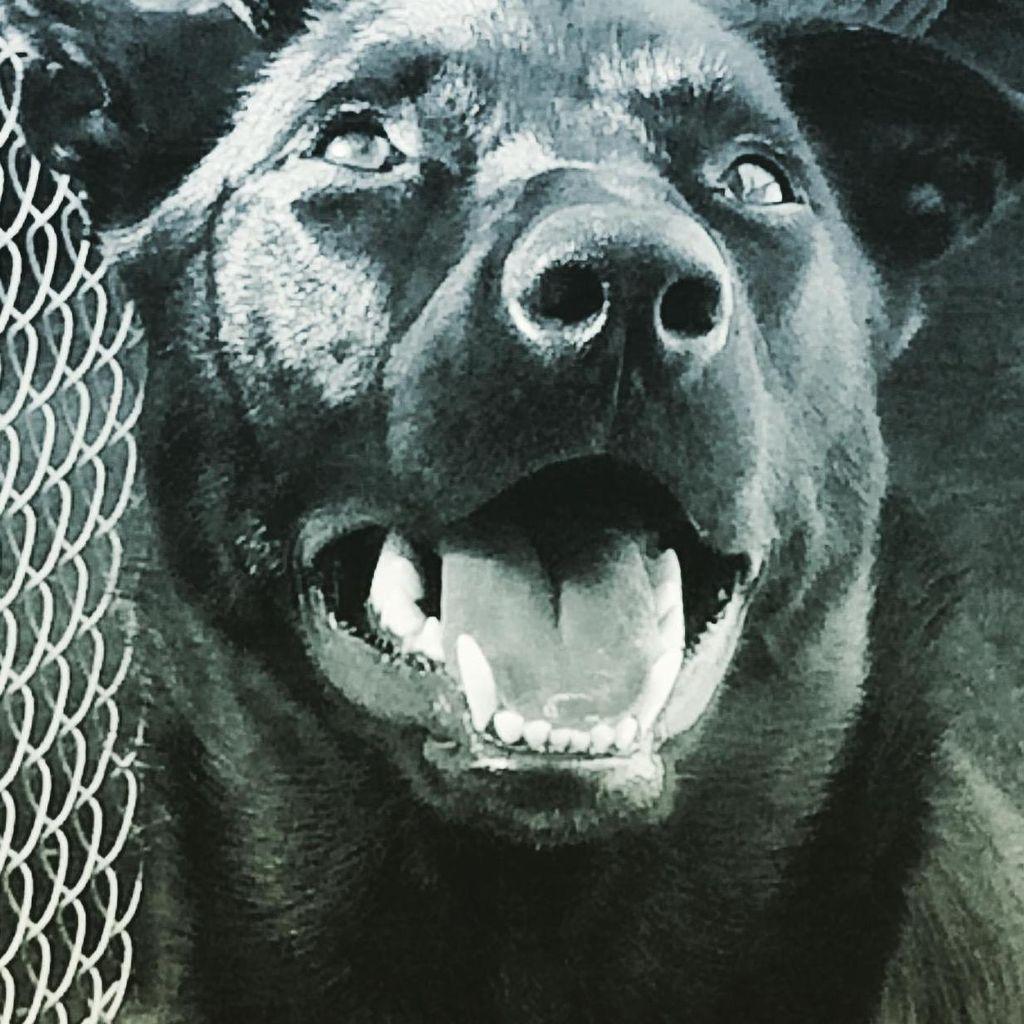 Good Dog Pet Care