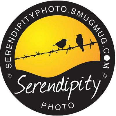 Avatar for Serendipity Photo