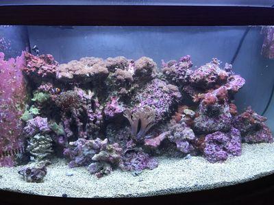 Avatar for Pacific Aquarium Services
